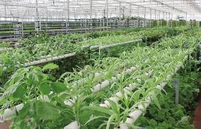 邹城举办2017中国(邹城)现代农业重点产业项目推介会