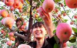 产业扶贫 媒体在行动-走进沂源三个水果特色小镇