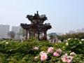 济南长途汽车总站:4月底前每天7点专线直达曹州牡丹园