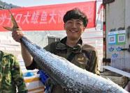 47秒 青岛鱼王争霸大开眼界,18.5斤鲅鱼比娃高