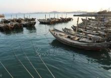 山东伏季休渔做较大调整 休渔时间提前至5月1日