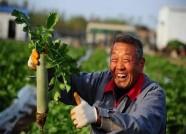 山东推进质量兴农工作会议4月24日将在寿光召开