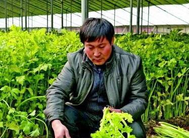 """""""齐鲁时代楷模""""良心农人陈明利:有名无利"""
