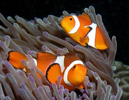 """""""青岛一号""""海底博士空间实验室将入驻青岛海底世界"""