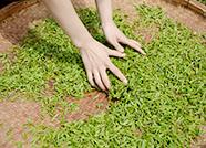 发布会|2020年日照茶园将达30万亩 产茶2.3万吨