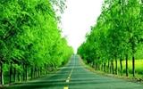 高唐县扎实开展铁路沿线创森工作 打造绿色长廊景观