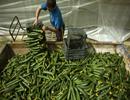 泰安1-4月出口蔬菜产品2766.786万美元