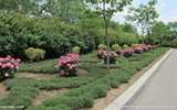 冠县加强城区夏季绿化管护 修剪绿化带20余万平方米