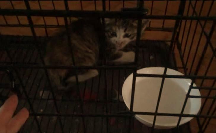 49秒 | 烟台顽皮小猫被困车厢 苦熬三天终获救
