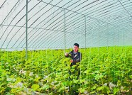 潍坊青州县域交易平台4个月交易额突破1800万元