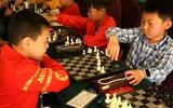 2017年山东省国际象棋等级赛在冠县举行