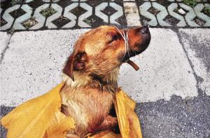 ?兰陵男子发射毒镖毒死村狗卖狗肉店 流窜8天偷40条狗
