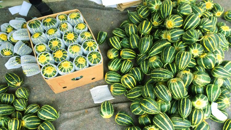 滨州小贩一车甜瓜一个也卖不出去,市民品尝直摇头