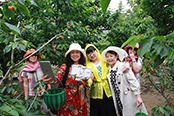 2017中国(厉家寨)樱桃文化节5月20日开幕