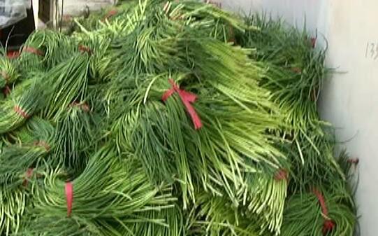 济南菜市场1.5元蒜薹地头价2毛,如何避免菜贱伤农?