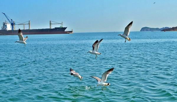 威海机场口岸跨境电商对日出口业务迅速崛起