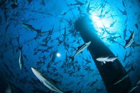 世界首座大型智能化深海渔场在青岛研制成功