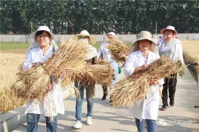 麦田里的科技守望者 山东省农科院的每一株麦穗都要编号