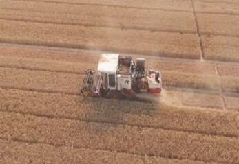 山东:小麦收获过九成 玉米机播进入高潮