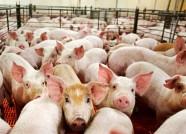 潍坊青州连续6年获得国家生猪调出大县奖励资金