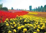 潍坊青州倾力打造花卉产业 年产花卉逾2000万株