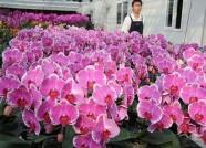 潍坊青州花卉创业园入选全国农村创业创新园区