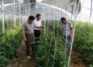 潍坊农业专家奔赴峡山昌乐 为农户提供免费技术指导
