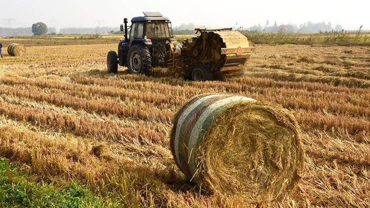 """小麦归仓后如何处理秸秆?看德州一根秸秆的价值""""逆袭"""""""