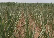 日照:本轮降雨致全市农作物旱情全部解除
