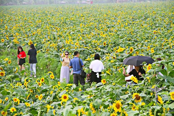 青岛西海岸生态观光园开启盛夏赏花季 引领暑期旅游新潮流