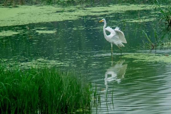高温天里的小清凉!济南白鹭湿地公园尽情撒欢