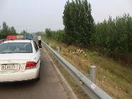 日照高速交警及时驱赶羊群下高速 对放羊者进行安全教育