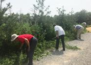 泰安大汶口文化风景名胜管委会优化景区环境 助力创城