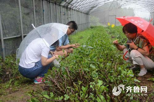 中茶所科研人员赴浏园春开展茶树害虫调查研究