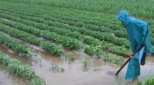 海丽气象吧丨山东持续强降雨结束局地仍有大雨,部分农田受灾严重
