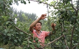 东阿:种植饲养相结合 普通农户走上脱贫致富路