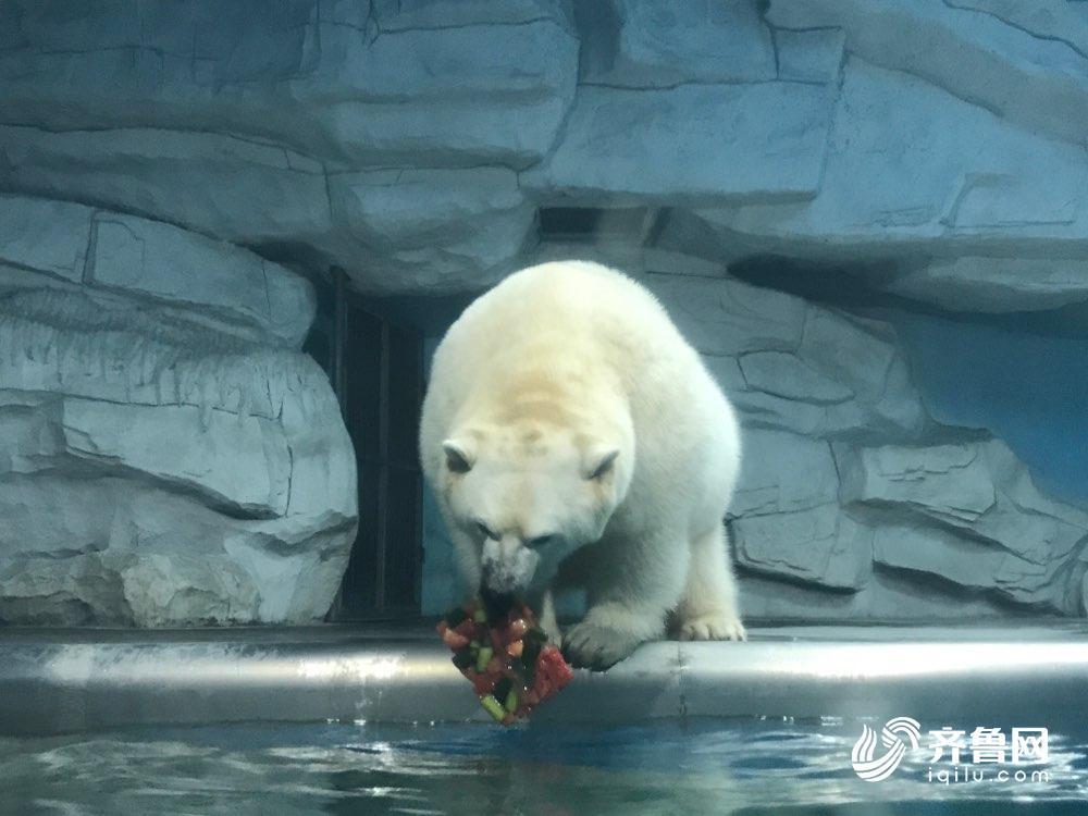 """极地海洋世界动物避暑有""""凉方"""":吃冰镇瓜果吹24小时"""