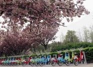 """潍坊公共自行车成""""金名片"""" 日均使用量20多万次"""