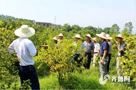 潍坊农业扶贫取得阶段性成果 12615个贫困人口受益