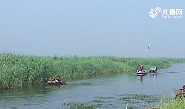 [牢记总书记嘱托 奋力走在前列 喜迎党的十九大]东平湖:生态养鱼 环保经济效益双赢