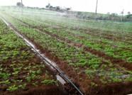 潍坊拟定14个新型经营主体实施生姜水肥一体化项目