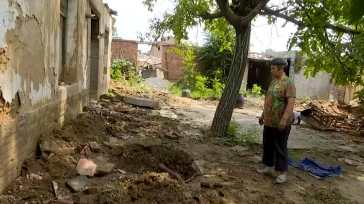济南:百年黄杨树遭贼手 盗贼钻洞运古树