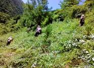 山东省林业厅检查高密森林资源管理情况 强化林地保护管理
