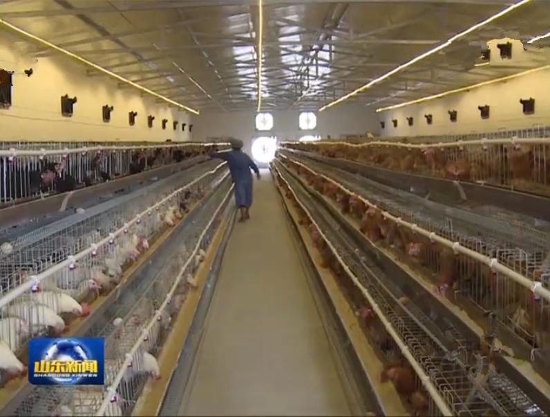 中央环保督察在山东 | 济南:搬迁科研养鸡场 还市民清新环境