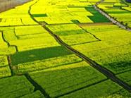 9587.37万亩耕地红线!山东永久基本农田划定