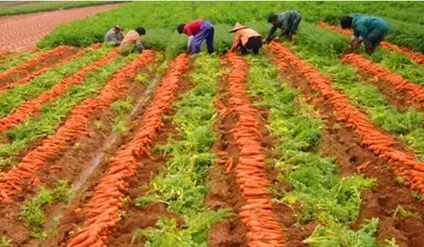 牡丹区水肥一体化每亩补贴400元 符合条件的来报名