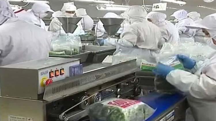 山东60家输日菠菜企业获利好 10月19日起取消毒死蜱批批检