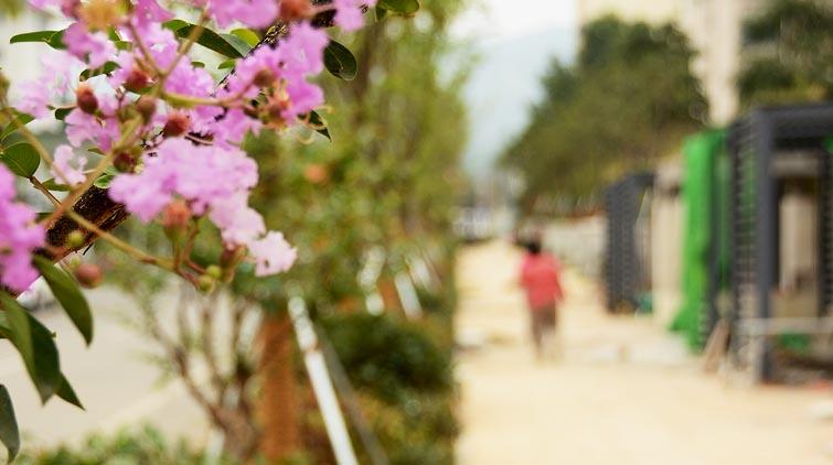 山师东路变形计丨绿植上新 花架连廊造型初成