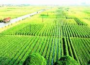 潍坊2017年耕地质量提升和化肥减量增效补贴资金525万元