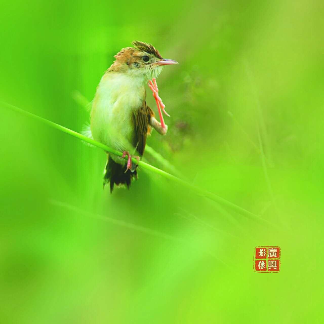 """济南黄河滩新进""""网红"""",终于不再是玉符河的白鹭了!"""